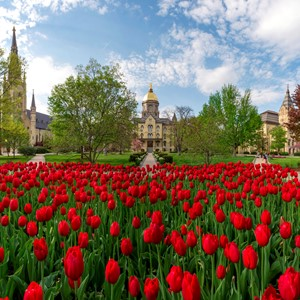 Main Building Tulips 3293 - Copy.JPG